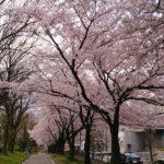 名古屋の隠れた桜の名所