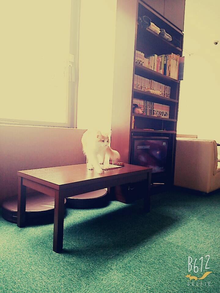 キャットストリートの猫と本棚